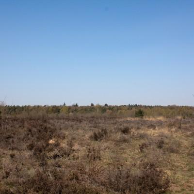 Edese Heide